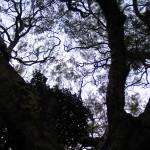 Arbres à nids