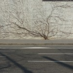 L'arbre de Batida...